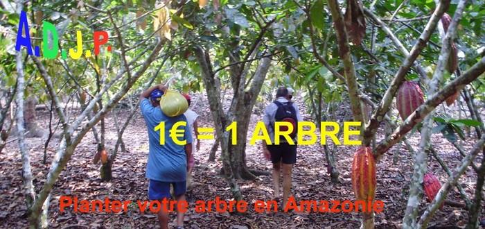 1€ = 1 arbre : Planter votre arbre en Amazonie
